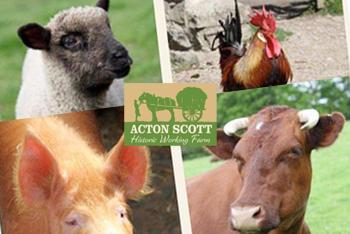 Acton Scott Working Farm Shropshire